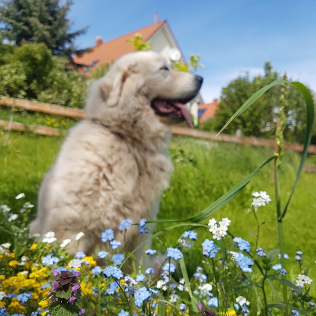 Urlaub zusammen mit Ihren Hund...