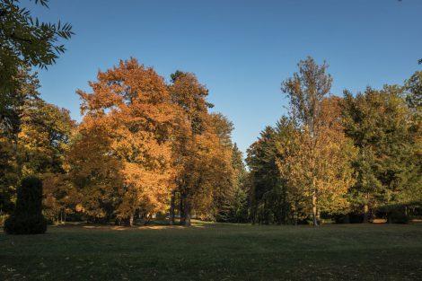 Lädt zum Flanieren und Verweilen ein – der einst im englischen Stil erbaute Kurpark mit wertvollen botanischen Gewächsen