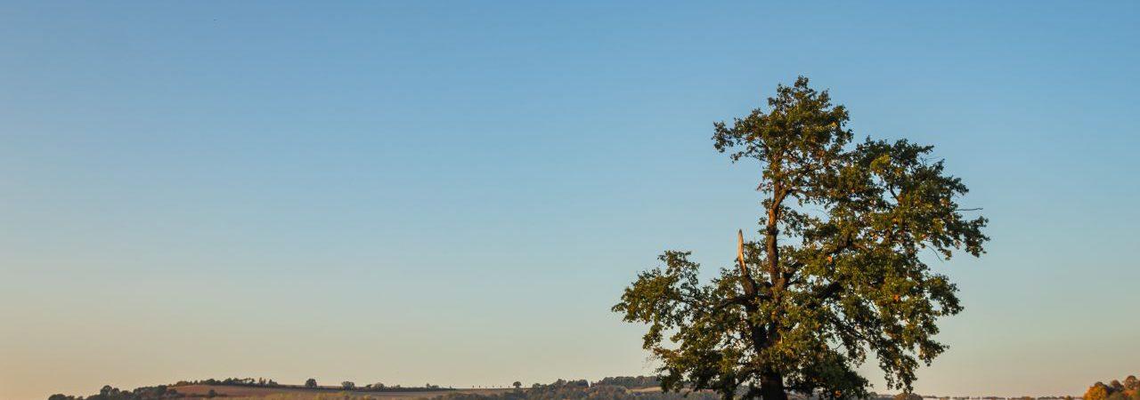 """Herbststimmung auf den Feldern der Bio-Landwirtschaft Kreischa, Lieferant für das """"Kräuterberg'l"""""""