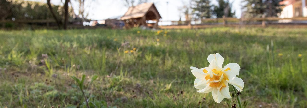 Frühlingsgrüße im Garten des Landhotels