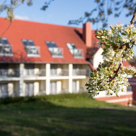 Kirschblüten im Garten des Kräuterberg'l